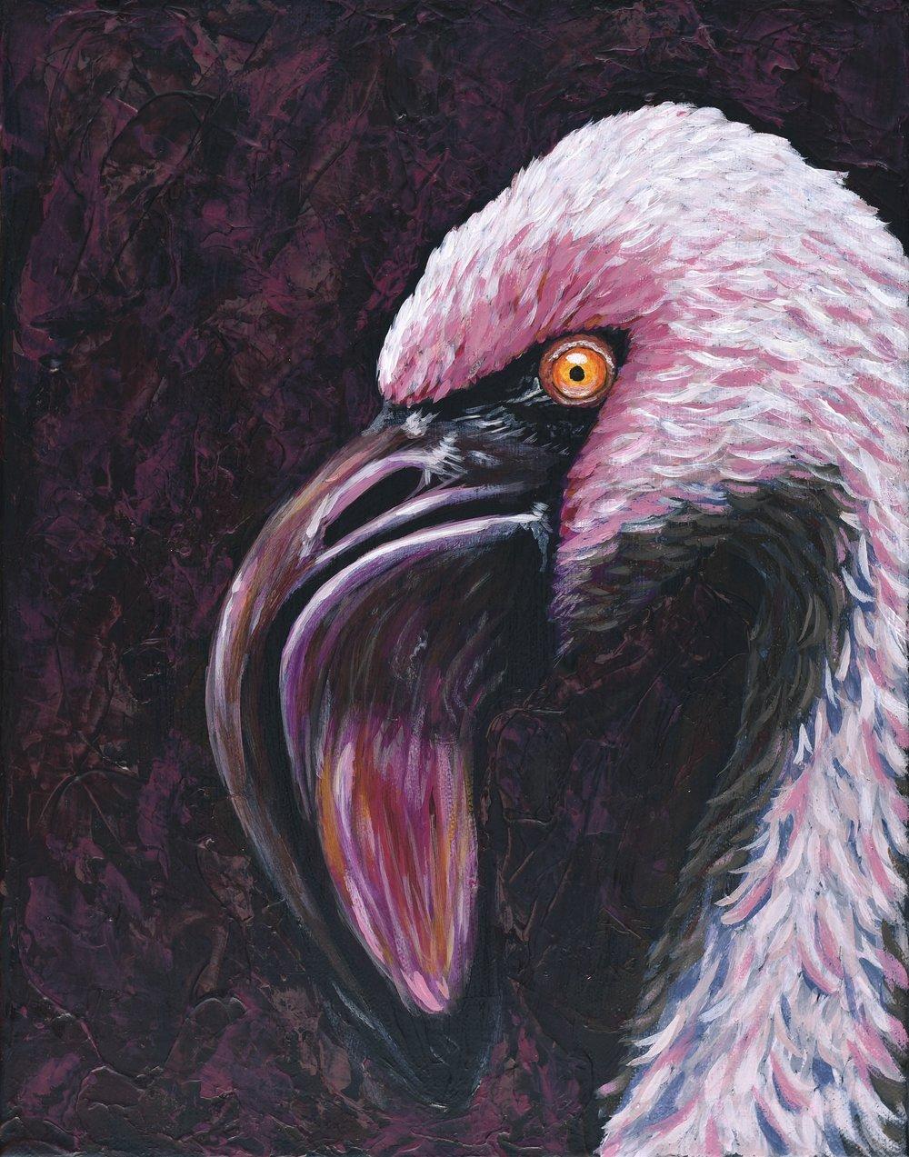 "Phoenicoparrus minor  Lesser Flamingo Acrylic on 11""x14"" canvas   Prints available"