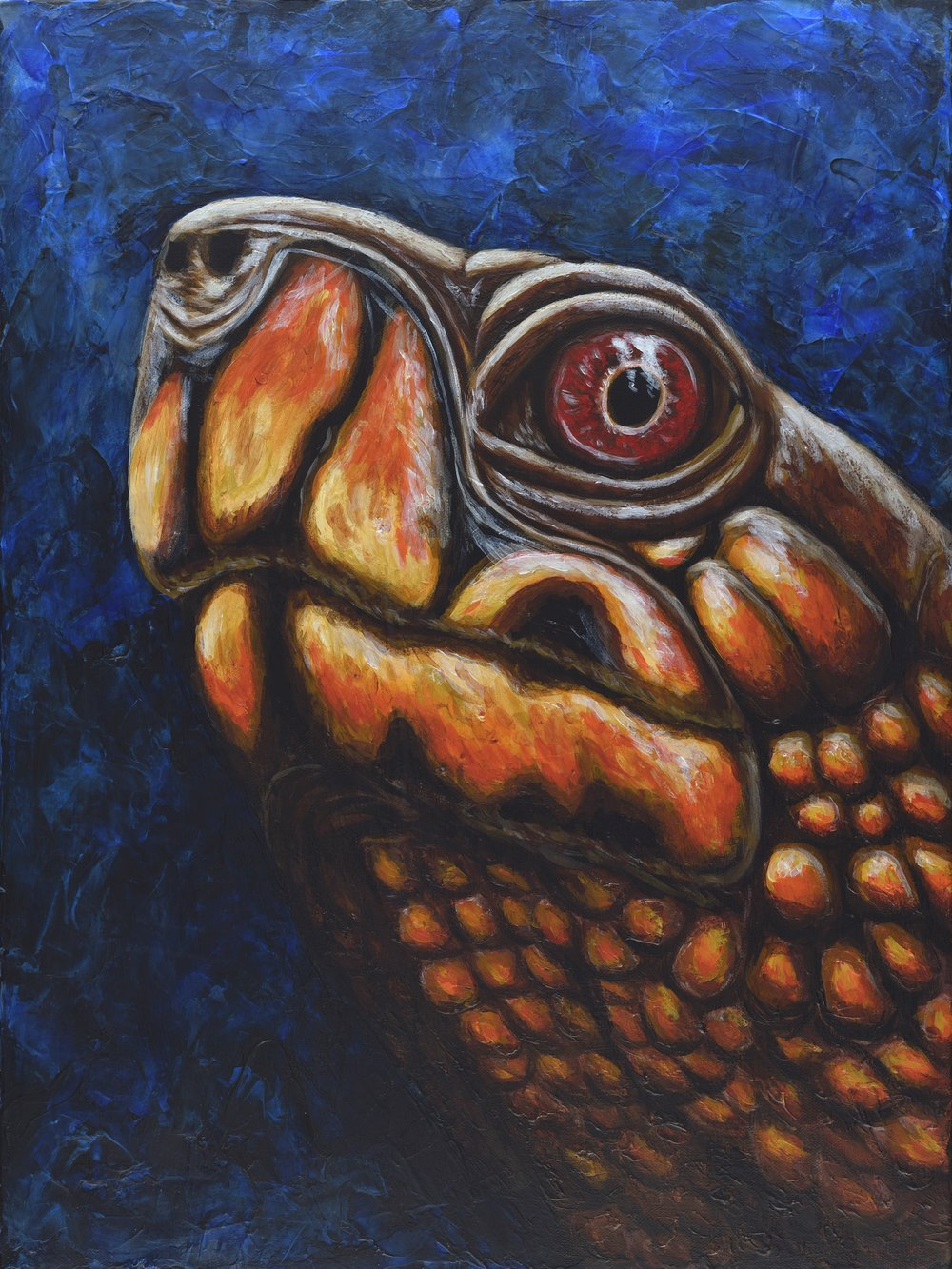 "Terrapene carolina triunguis  Three-toed box turtle Acrylic on 18""x24"" canvas   Prints available"