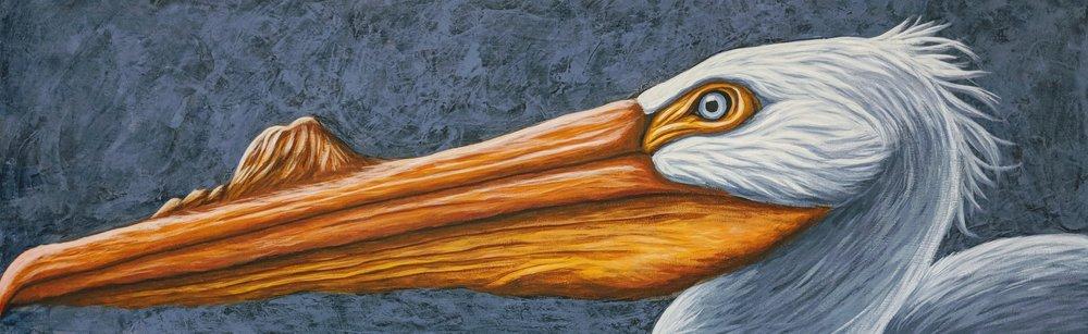 "Pelecanus erythrorhynchos  White Pelecan Acrylic on 36""x12"" canvas"