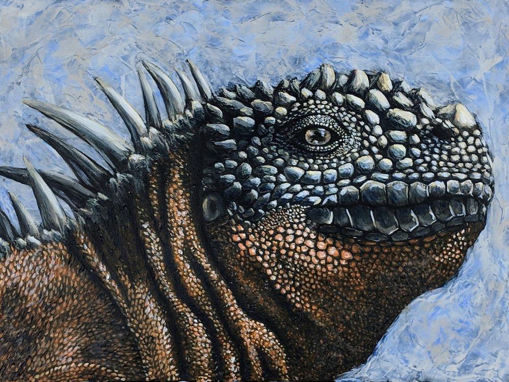 "Amblyrhynchus cristatus  Marine Iguana Acrylic on 24""x18"" canvas"