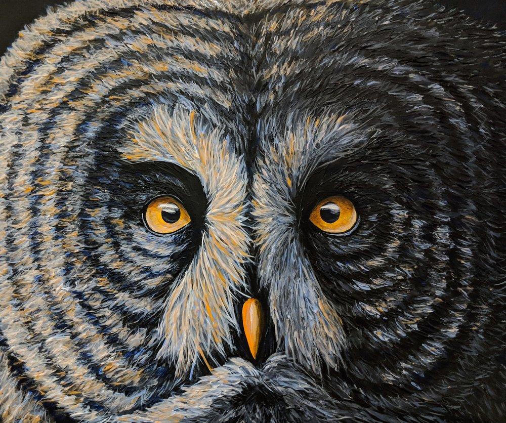 "Strix nebulosa  Great Grey Owl Acrylic on 24""x20"" canvas"