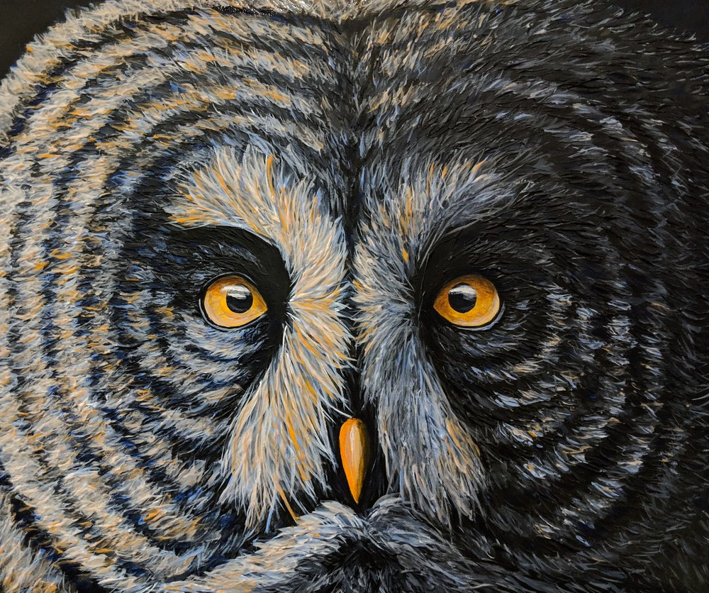 "Strix nebulosa  Great Grey Owl Acrylic paint on 24""x20"" canvas"