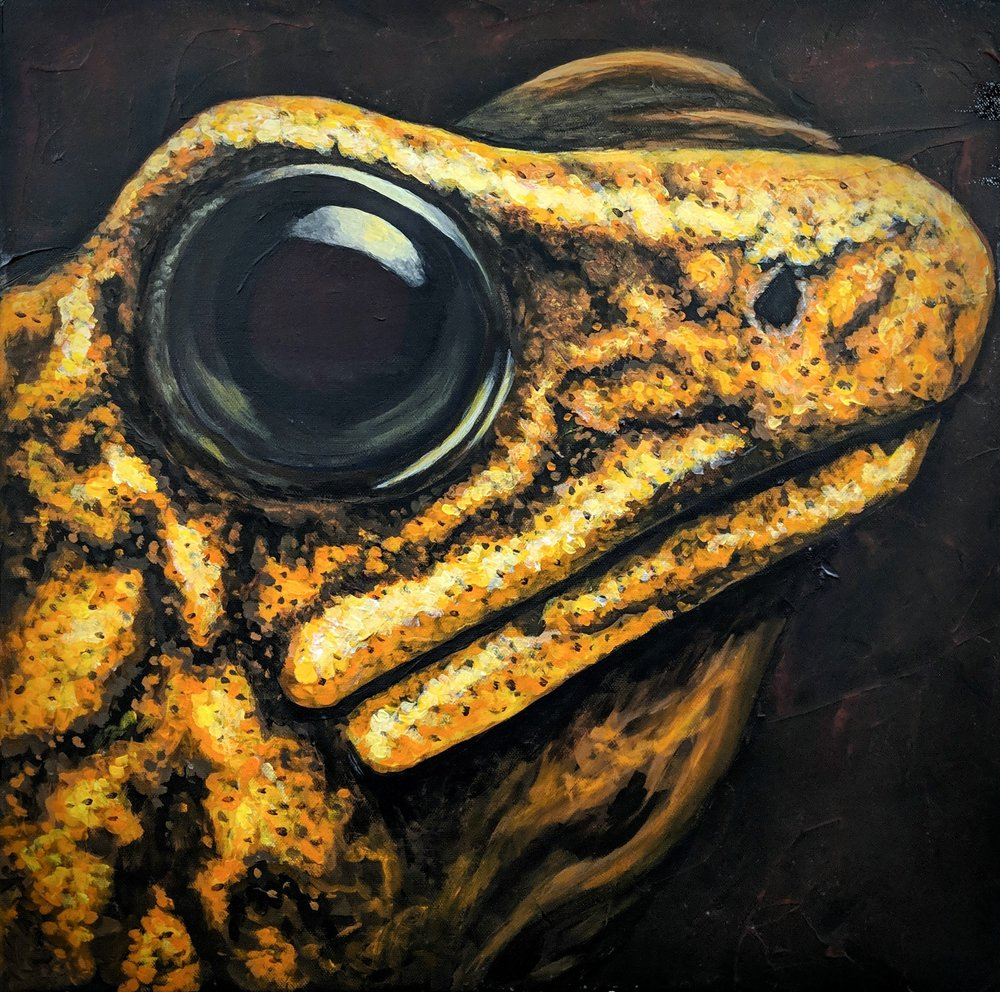 "Oophaga sylvatica  'Diablito' - Little Devil Poison Frog Acrylic paint on 20""x20"" canvas"