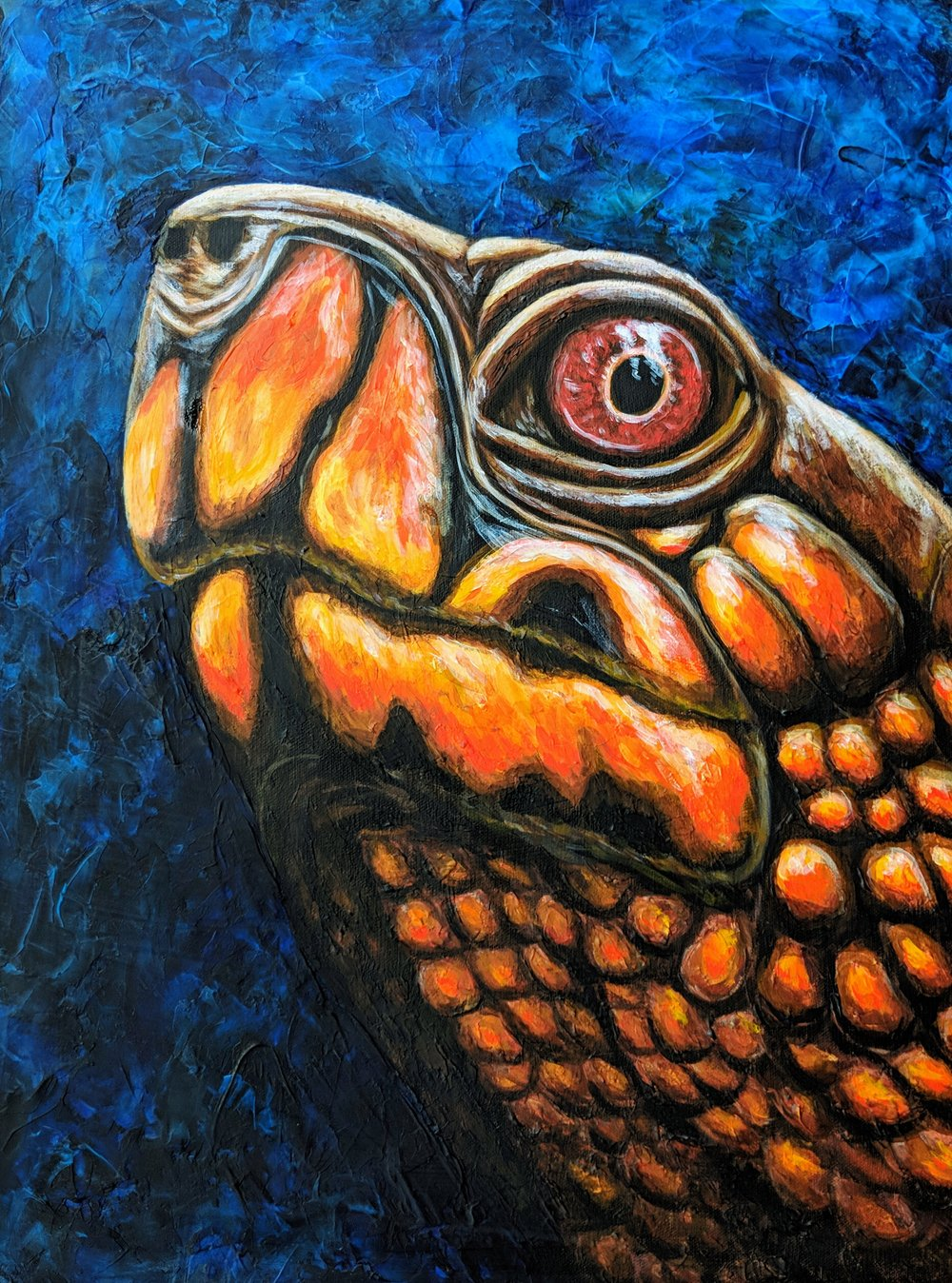 "Terrapene carolina triunguis  Three-toed Box Turtle Acrylic paint on 18""x24"" canvas   Prints available"