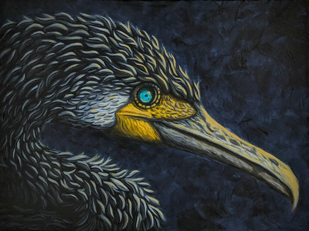 "Phalacrocorax carbo  Great Cormorant Acrylic paint on 16""x12"" canvas"