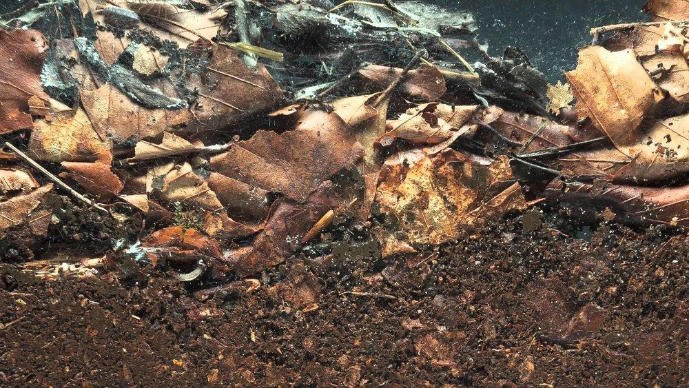 forest soil.jpg