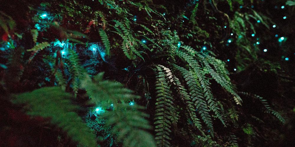 glowworm_landscape-1469462954-new-zealand-earths-mythical-islands-glow-worms.jpg