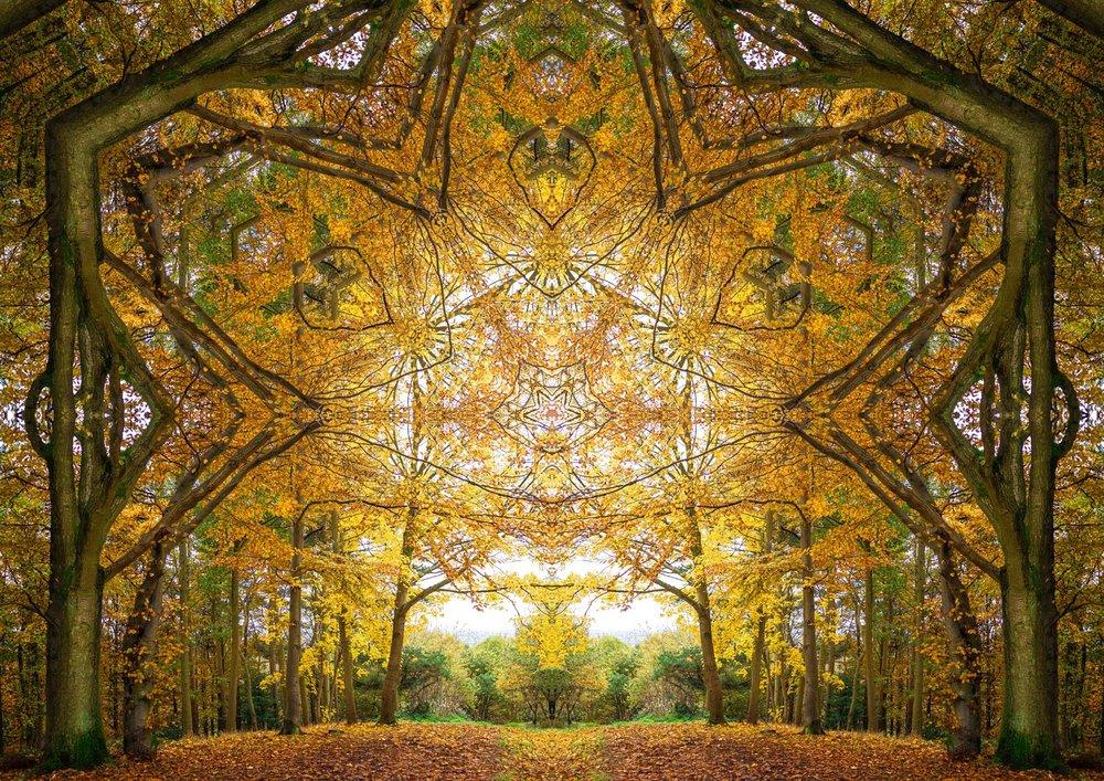 Autumn Portal 1