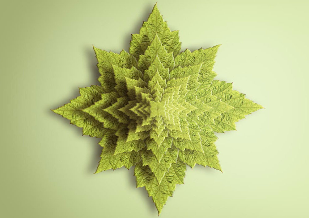 Spiky Leaf Fractal