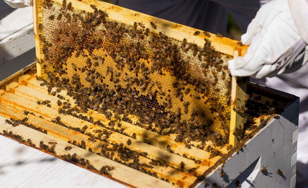 Columbia Gorge Honey The Dalles Oregon Raw honey and healing wild honey wild bees_-11.jpg