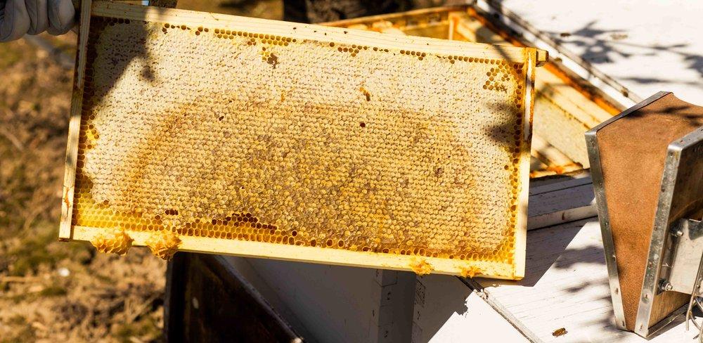Columbia Gorge Honey The Dalles Oregon Raw honey and healing wild honey wild bees_-20.jpg