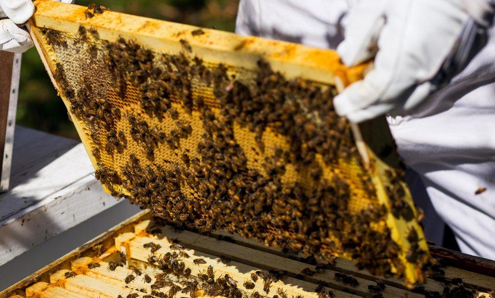 Columbia Gorge Honey The Dalles Oregon Raw honey and healing wild honey wild bees_-23.jpg