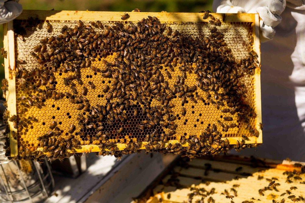 Columbia Gorge Honey The Dalles Oregon Raw honey and healing wild honey wild bees_-24.jpg