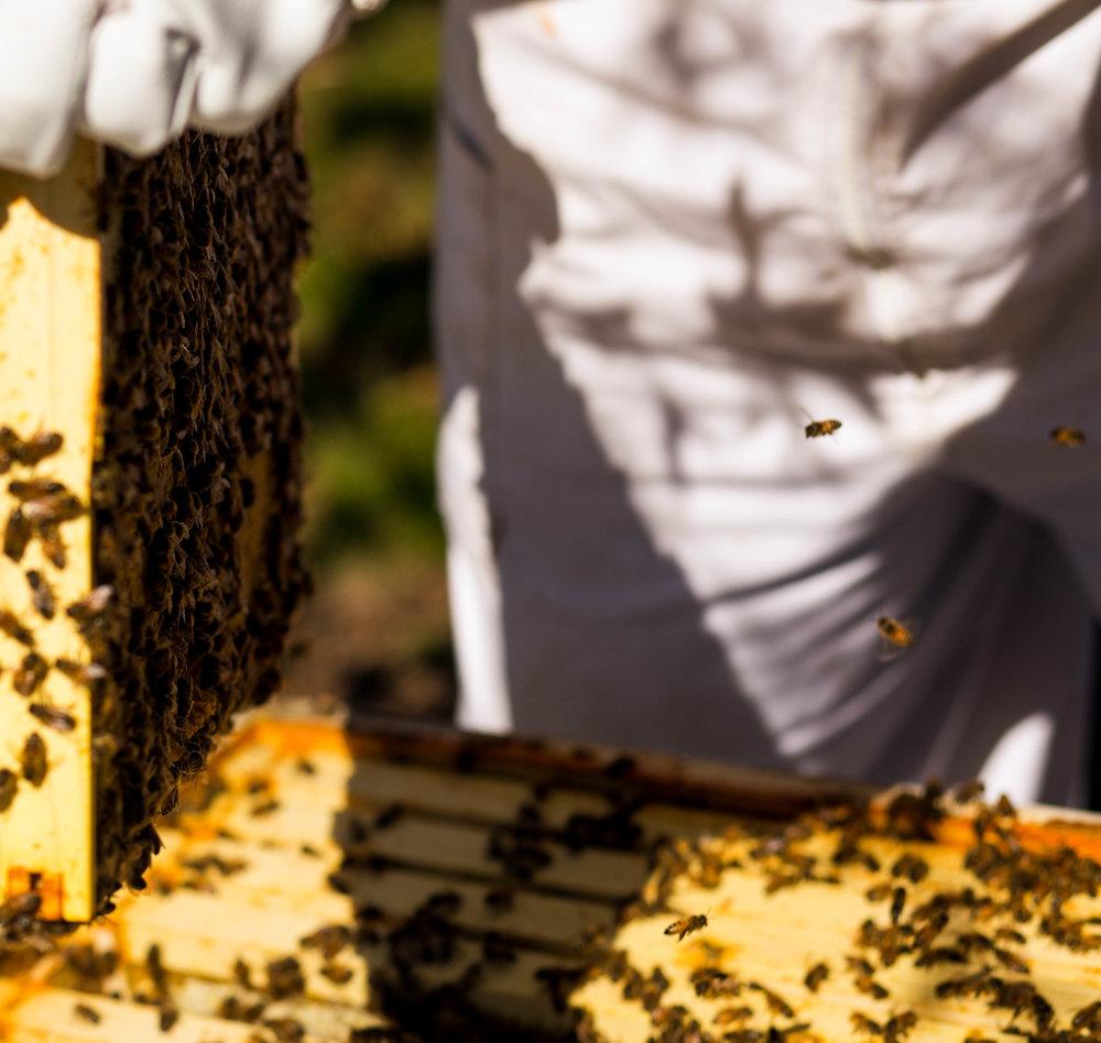 Columbia Gorge Honey The Dalles Oregon Raw honey and healing wild honey wild bees_-25.jpg
