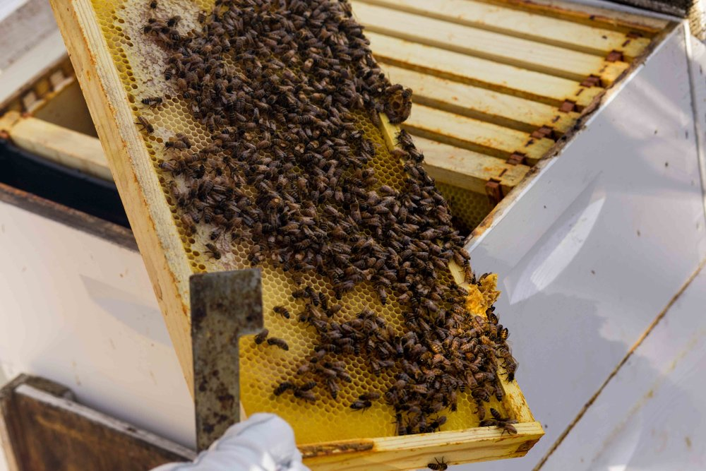 Columbia Gorge Honey The Dalles Oregon Raw honey and healing wild honey wild bees_-28.jpg