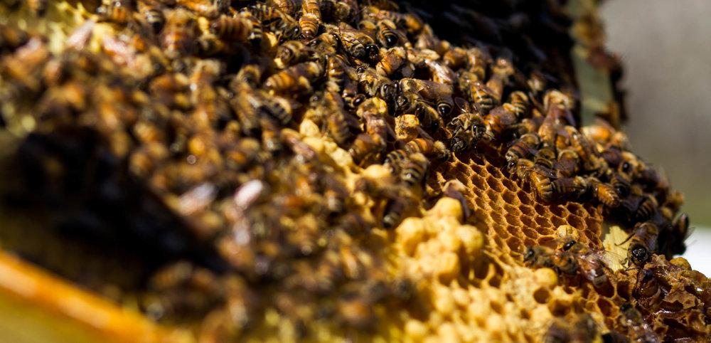 Columbia Gorge Honey The Dalles Oregon Raw honey and healing wild honey wild bees_-33.jpg