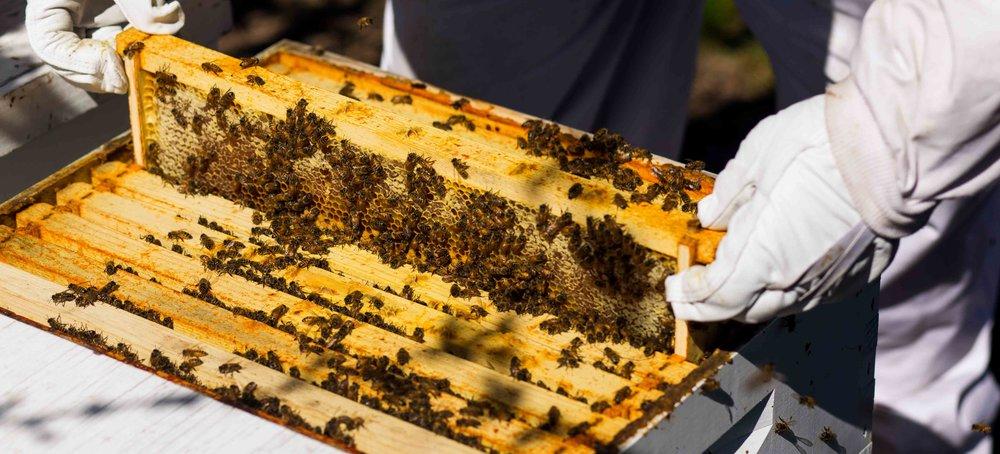 Columbia Gorge Honey The Dalles Oregon Raw honey and healing wild honey wild bees_-47.jpg