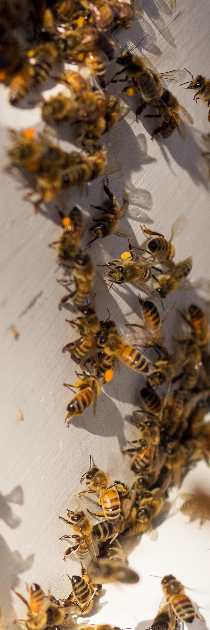 Columbia Gorge Honey The Dalles Oregon Raw honey and healing wild honey wild bees_-44.jpg