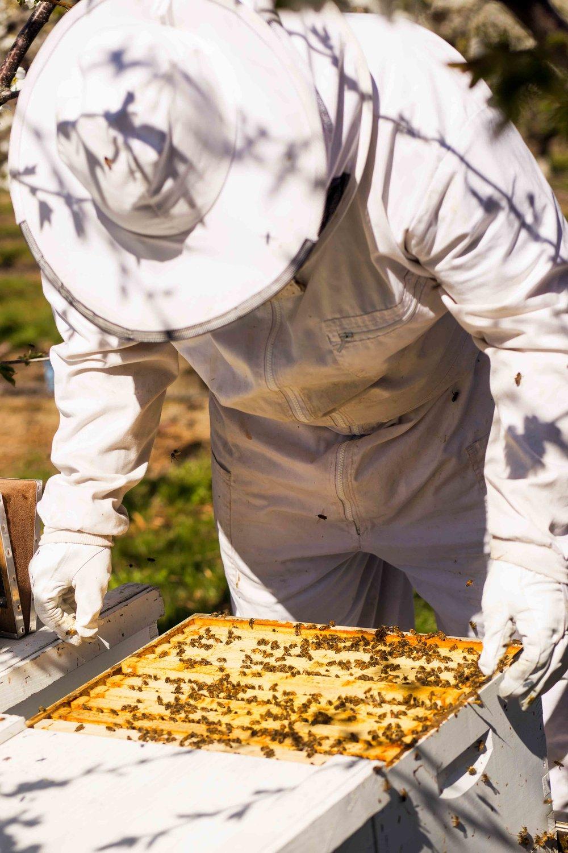 Columbia Gorge Honey The Dalles Oregon Raw honey and healing wild honey wild bees_-56.jpg
