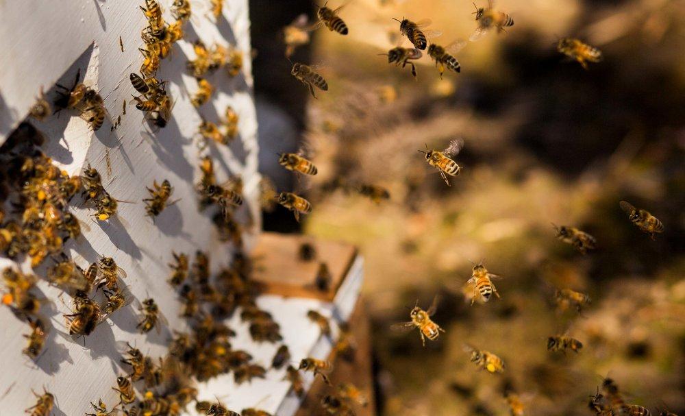 Columbia Gorge Honey The Dalles Oregon Raw honey and healing wild honey wild bees_-58.jpg