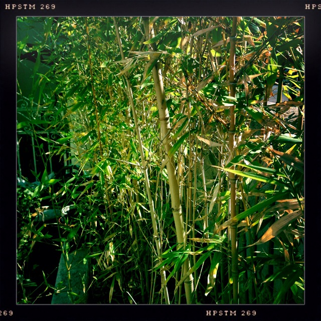 photo-bamboo.jpg