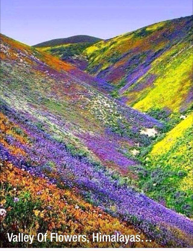 Himalayas-valley-of-flowers.jpg