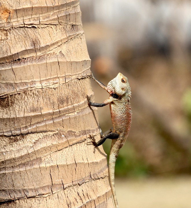 lizard-1022995_960_720.jpg