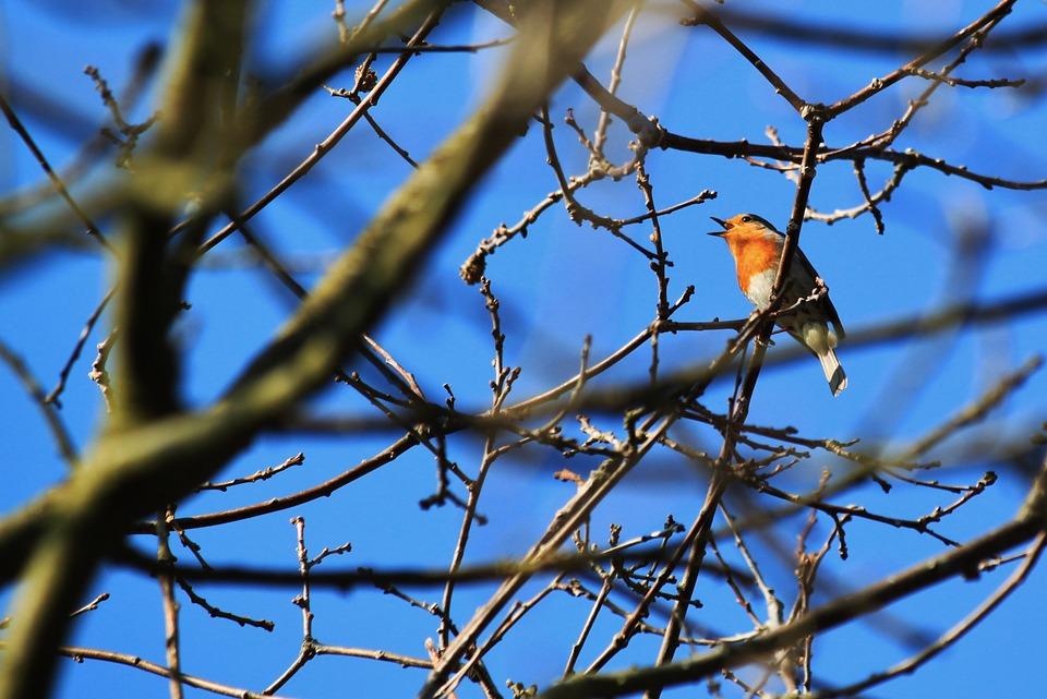 bird-287109_960_720.jpg