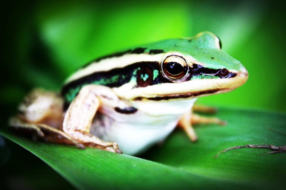 treefrog-765123_960_720.jpg
