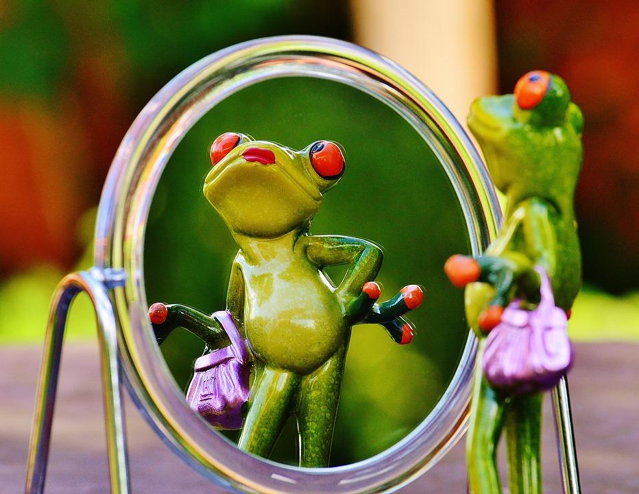 frog-1499068_960_720.jpg