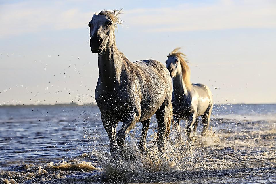 horse-1542480_960_720.jpg