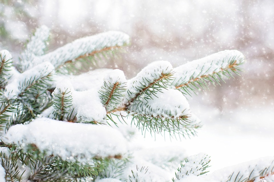 snow-in-pine-tree-1265119_960_720.jpg