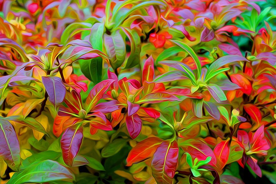 autumn-1816994_960_720.jpg