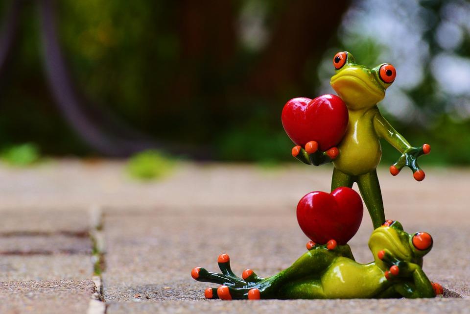 frogs-903174_960_720.jpg