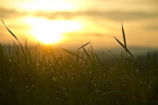 grass-546794__340.jpg
