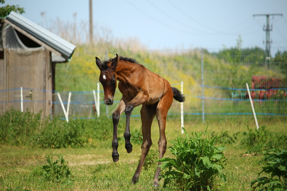 horse-1411469_960_720.jpg