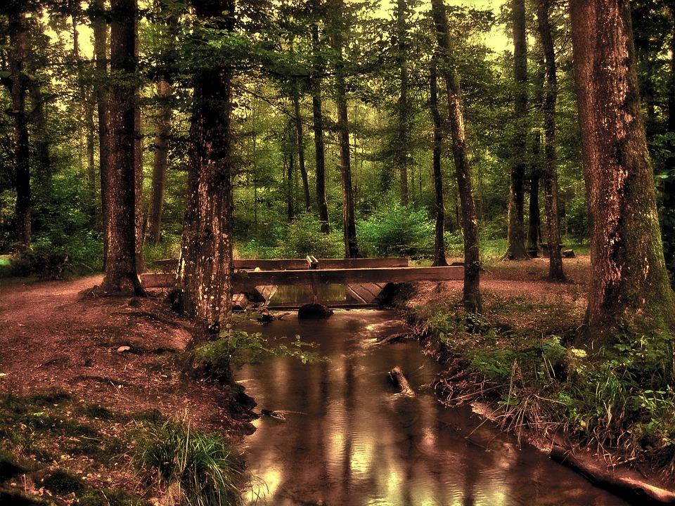 forest-110900_960_720.jpg