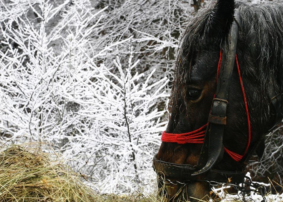 horse-1890690_960_720.jpg