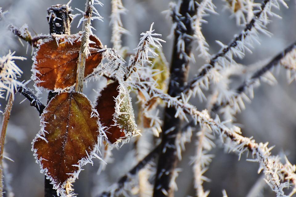 leaves-1944845_960_720.jpg