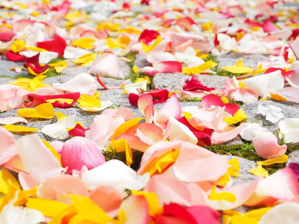 rose-petals-693570_960_720.jpg