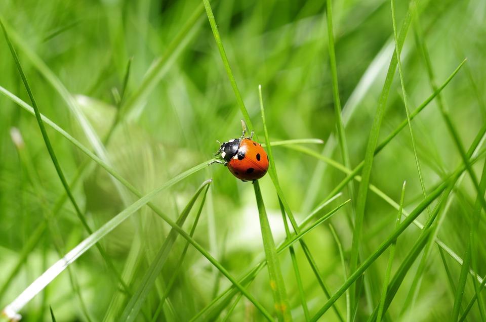 ladybug-796481_960_720.jpg