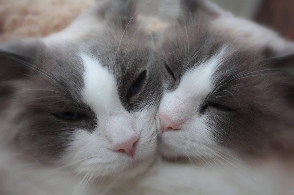 cats-2126698_960_720.jpg