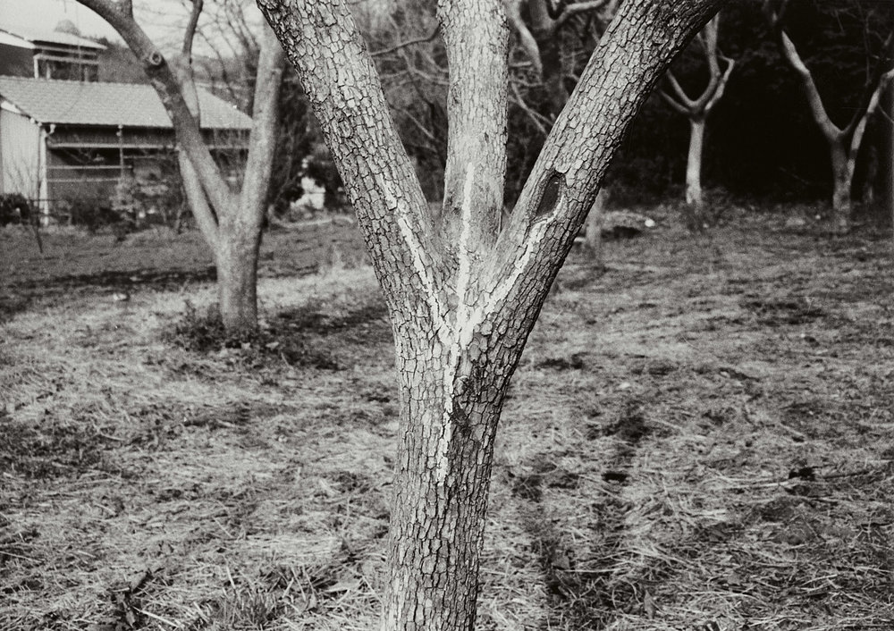 Branched Condition , 1973 枝況 ( Shikyō ) C-print 7 7/8 x 11 1/8 inches 20 x 28.4 centimeters