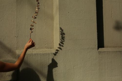 press photo-eucalyptus stem.jpg