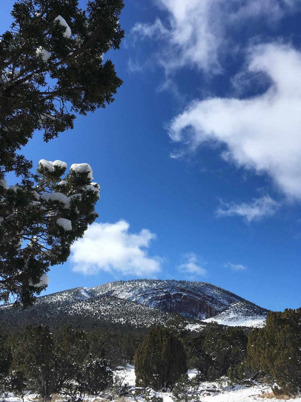 Alt-Text: snowy cinder cone mountain blue sky fluffy white clouds in background, piñon trees in foreground.