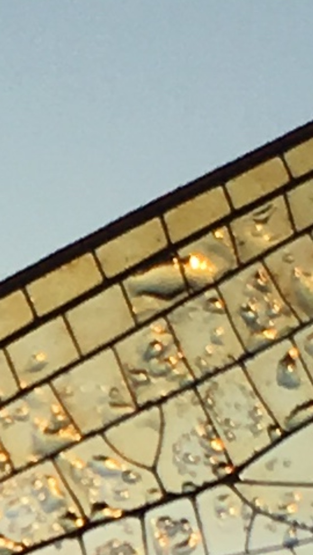 gray blue morning sky in upper left, close up detail of a dragonfly wing in foreground bottom right half of image.