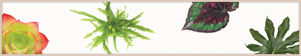 plant graphics_dots-01.png