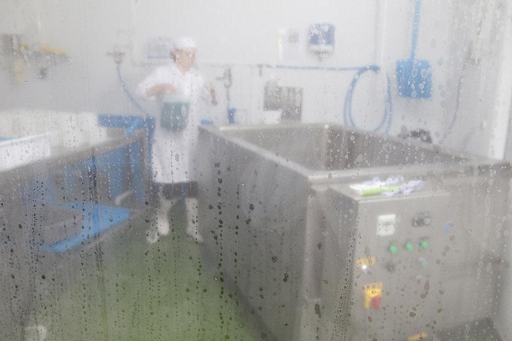 Gringa Dairy: Kristen Schnepp