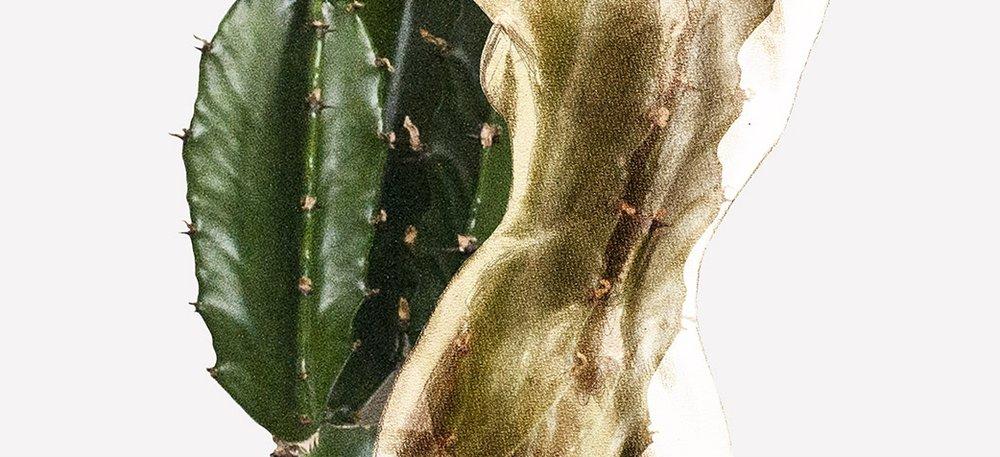 cactus liggend 1_liselottewijma.jpg
