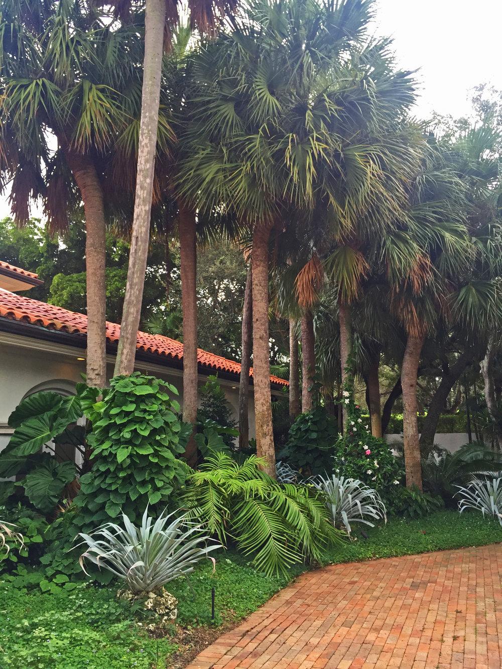 Pine Tree 5.jpg